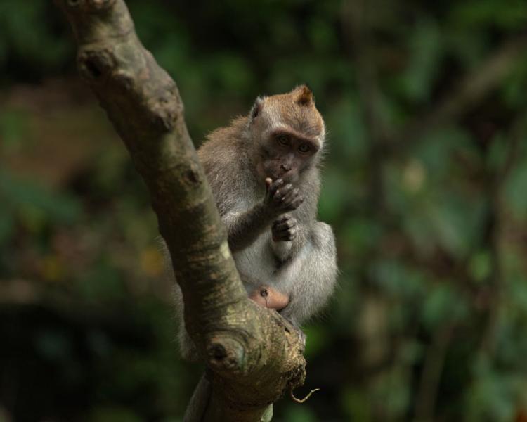 4 Tips When Visting Ubud Monkey Forest Safely